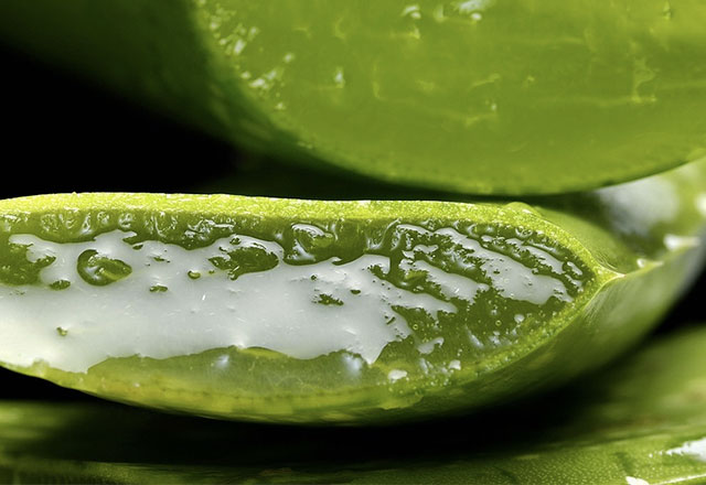 Aloe vera jeli nasıl