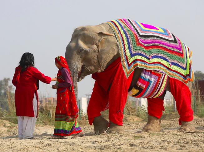 Fil kazakları