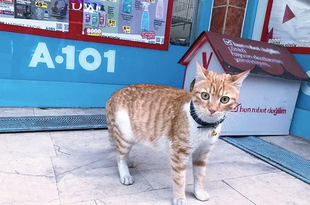kedi Bıcır
